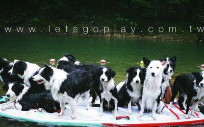 SUP寵物趣-如何與你的狗狗一同SUP水上漂