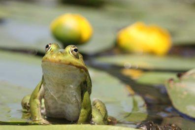 Amphibia Foto: Matjaž Bedjanič