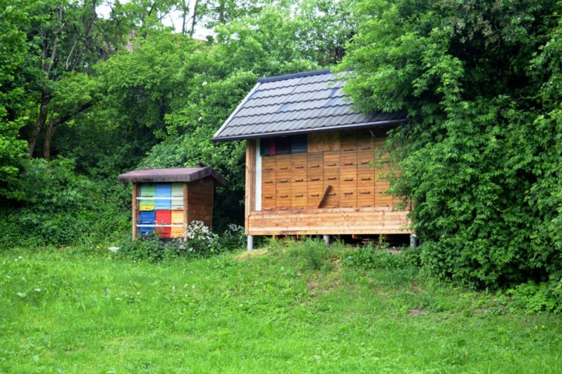Šentvid beekeeping