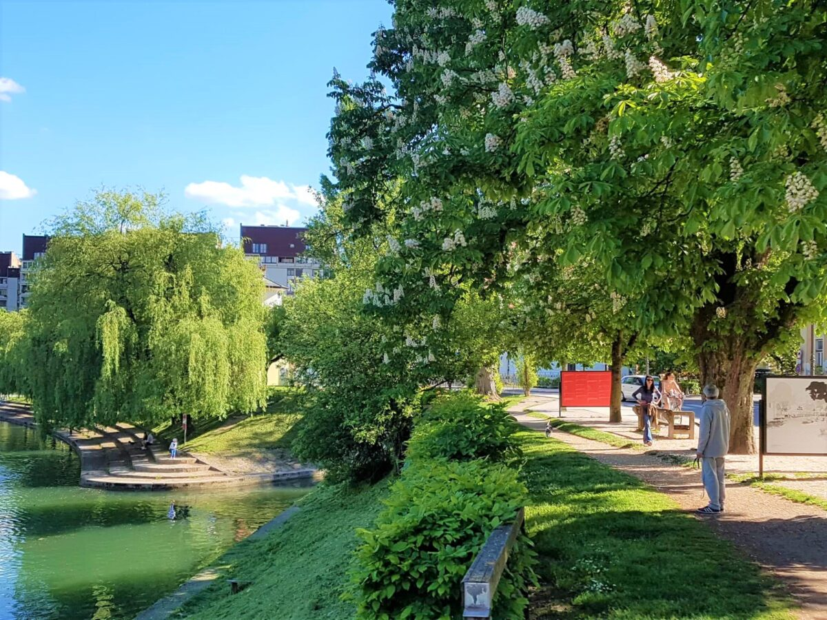 Ljubljana – the green capital that also chooses its 'TREE OF THE YEAR'!