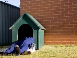 sleep in dog house