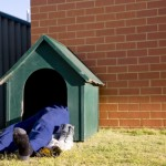 sleep in dog house
