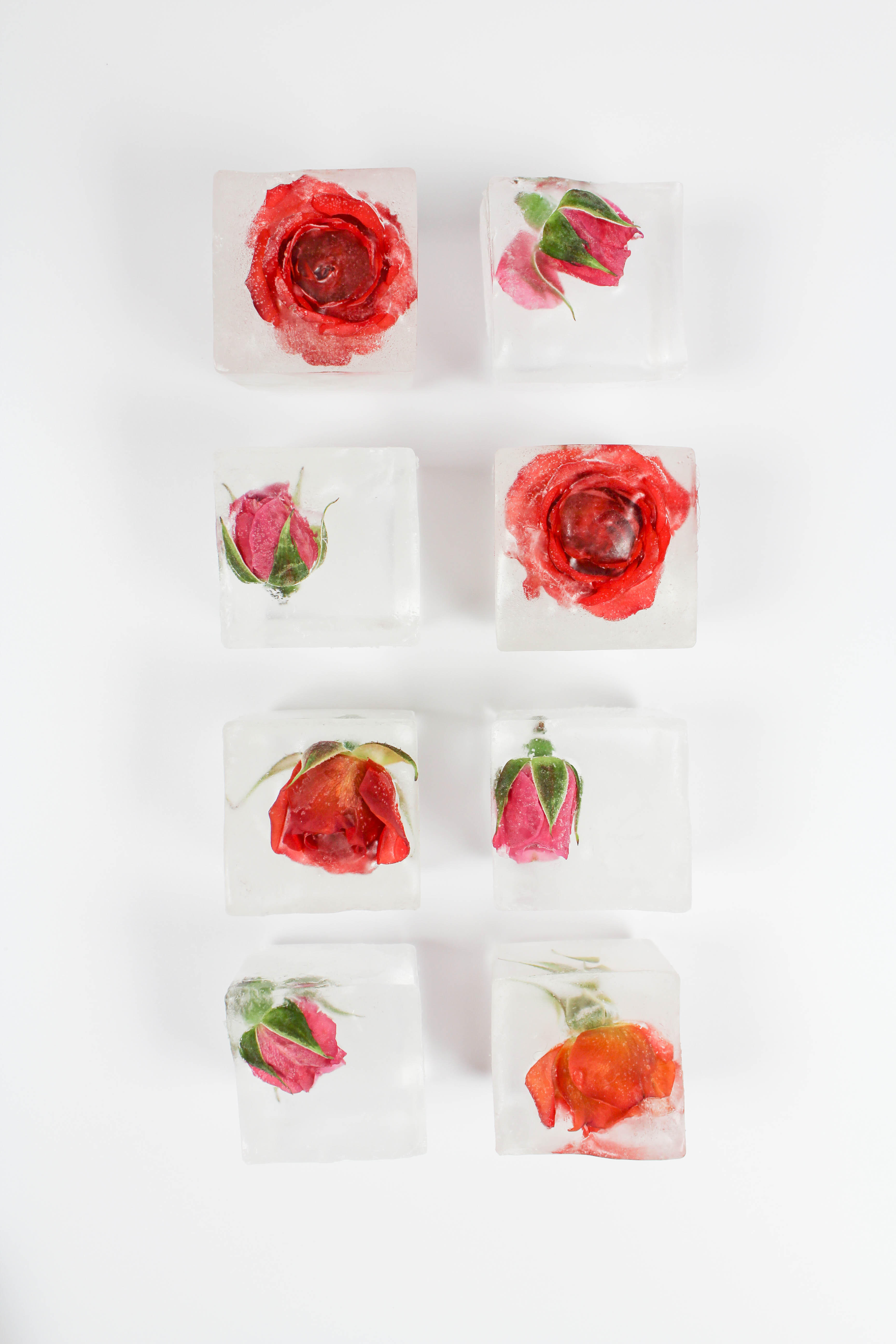 Rose Ice Cubes Lets Mingle Blog