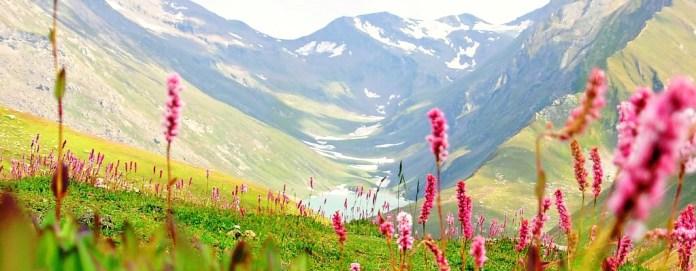 Valley-of-flowers_5.jpg
