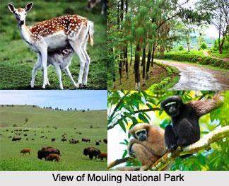 Mouling_National_Park__Arunachal_Pradesh_2.jpg
