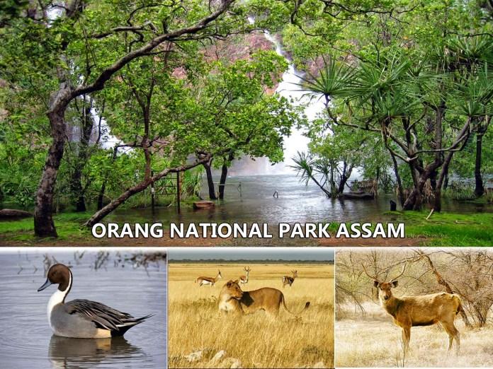 Orang national park Assam.jpg