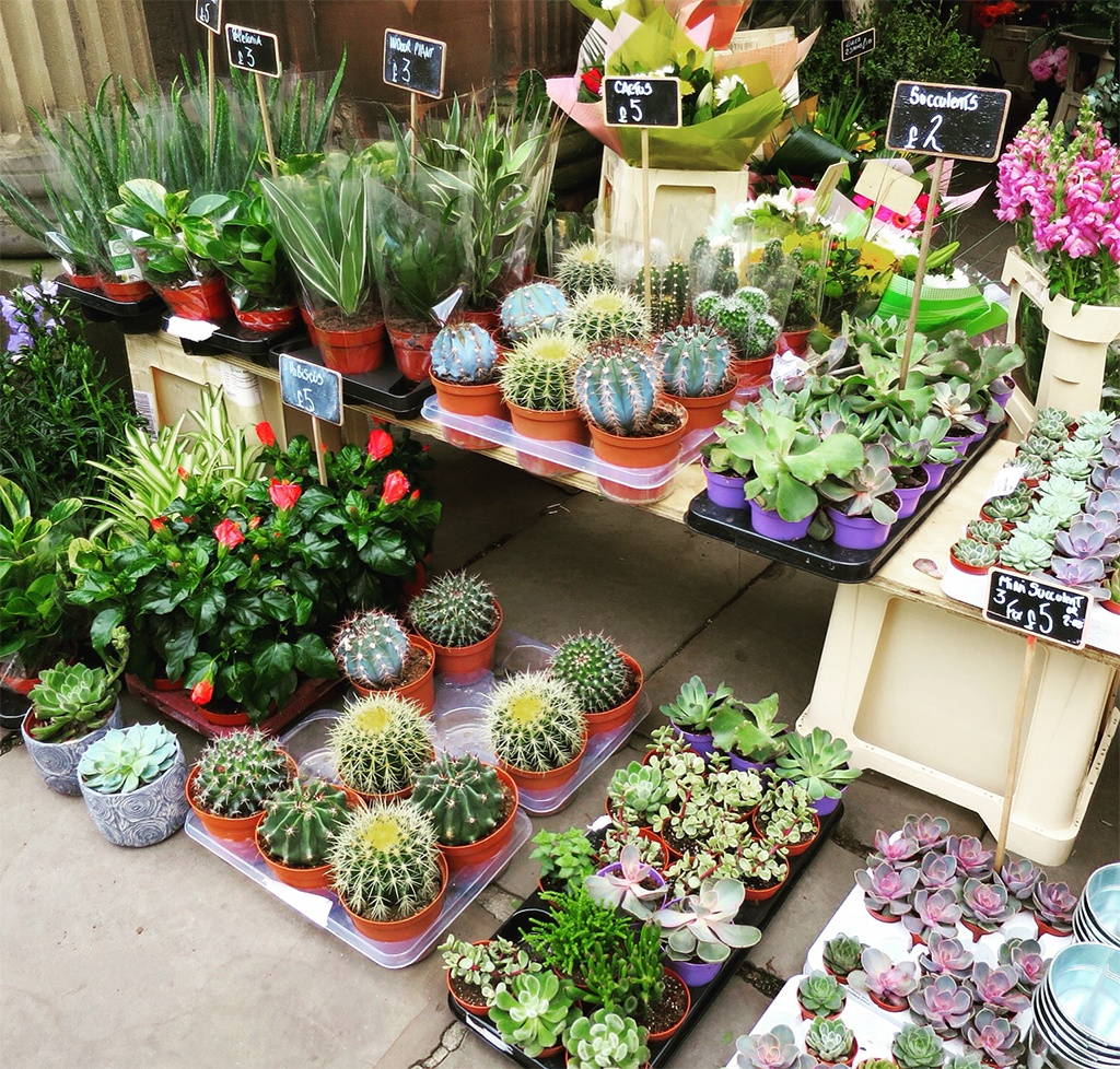 Cactus and Succulent Heaven Plants