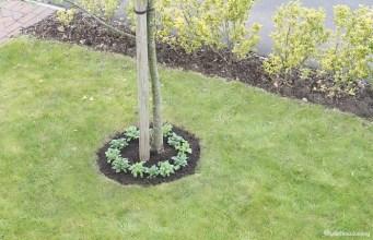 My Garden: Phase One
