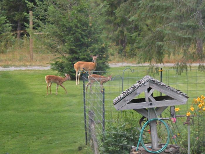 mom and baby deer