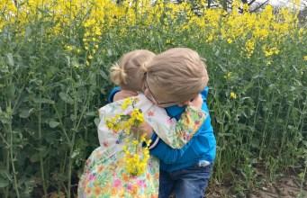 Yellow fields of family fun