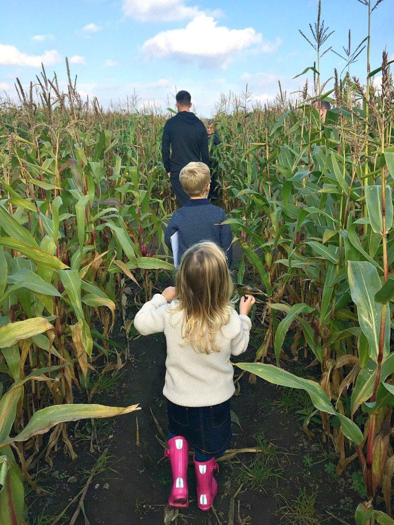 Me & Mine October 2016 Corn Maze Kenyon Hall