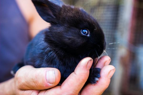5 considerations to make when buying a pet rabbit