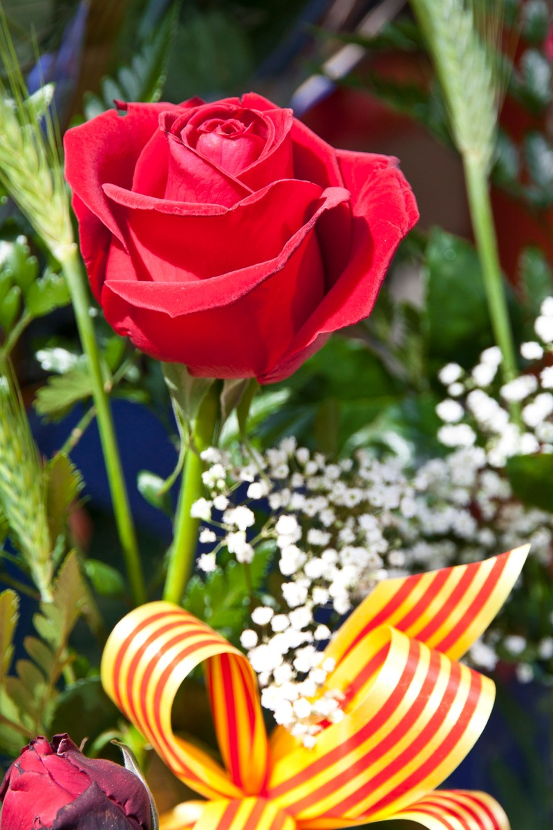 St. Jordi's Day, as Explained by an American-Israeli Jew
