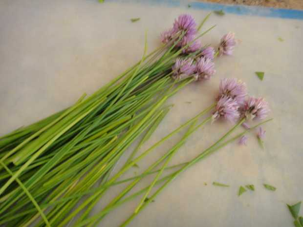 Chives and purple blossoms for Polenta Tart with Green Garlic and Spinach