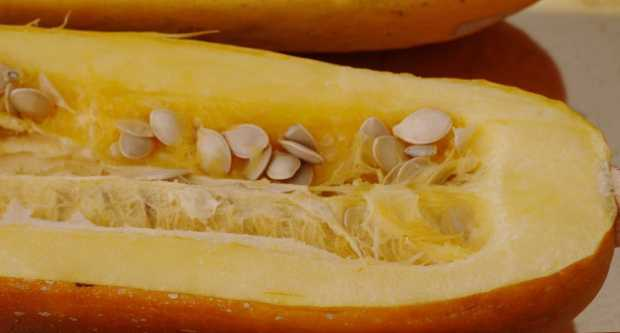 spahetti squash with seeds for Mexican spaghetti squash with pinto beans and easy enchilada sauce