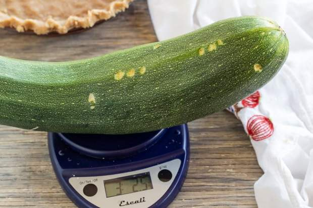 Giant zucchini for Zucchini Mock Apple Pie
