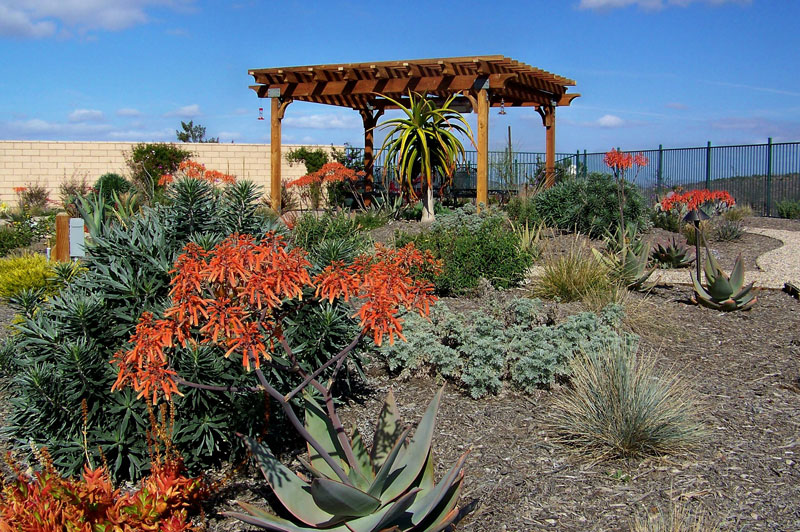 Xeriscape Landscape Design Software