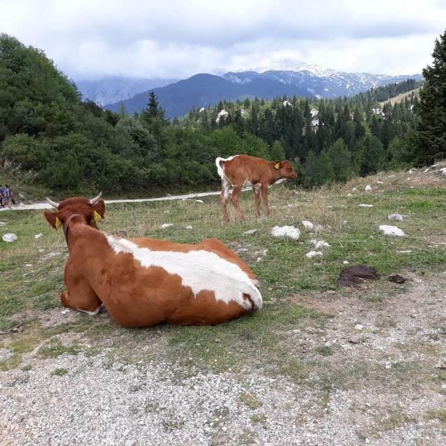 Vakantie in Slovenië met kids, Outdoor Paradijs! Klimmen met kinderen Velika Planina