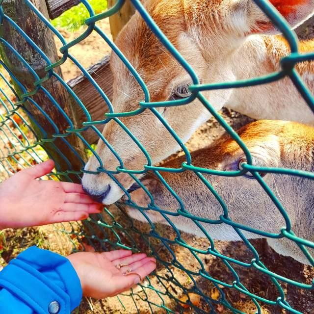 Herten in Vakantiepark Dierenbos