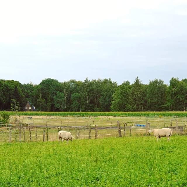 het uitzicht op het platteland