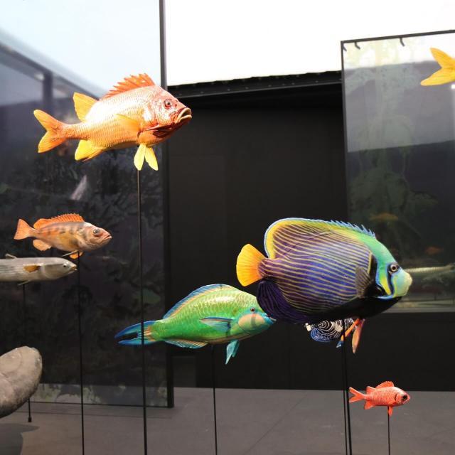 natuurhistorische collectie met vissen