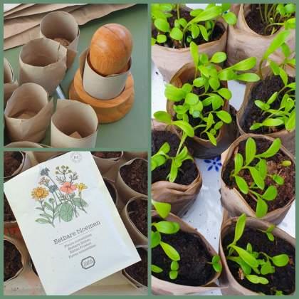 zaadjes opkweken: stamper om papieren kweekbakjes te maken en zaadjes voor eetbare bloemen