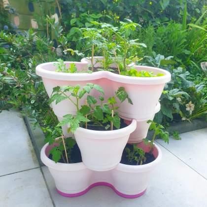 Plantenbakken voor moestuintjes. Heb je weinig ruimte, dan zijn dit soort potten een ideale manier voor verticaal tuinieren.