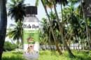 棕榈树林由Olala Vape
