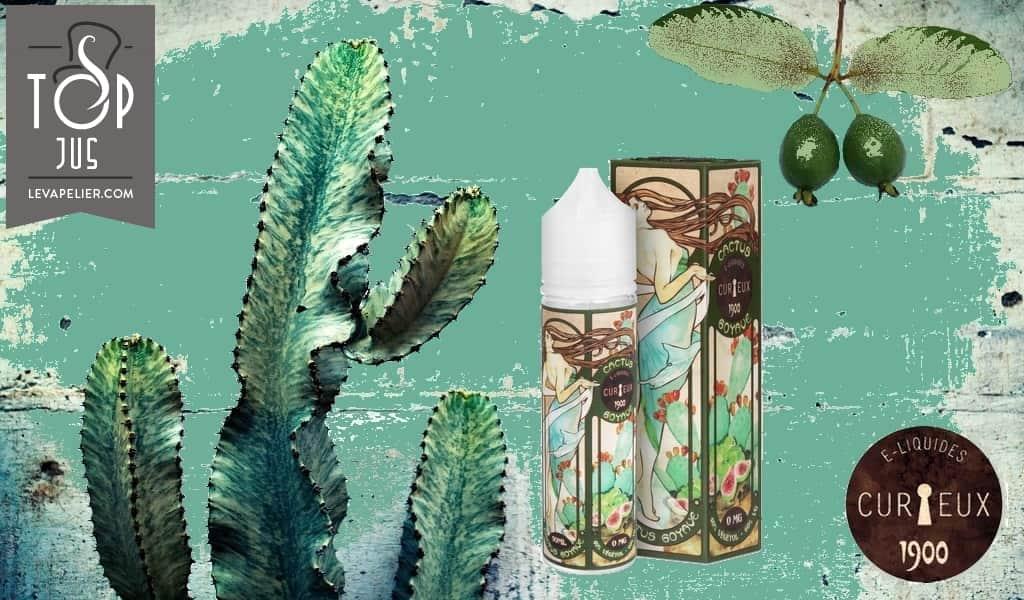 Cactus Goyave par Curieux