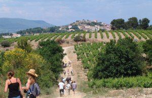 Un accord mets et vins au milieu des vignes du terroir de Pierrefeu