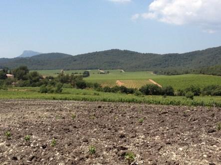 Un parcours au coeur des vignes, aux paysages variés