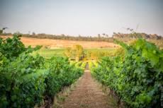 Un vignoble classé Côtes de Provence