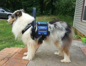 improvisation in dog training lucas's service dog tuck