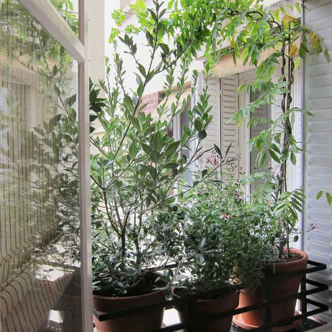 Jardinière Fenêtre Paris. Le Vert à Soi