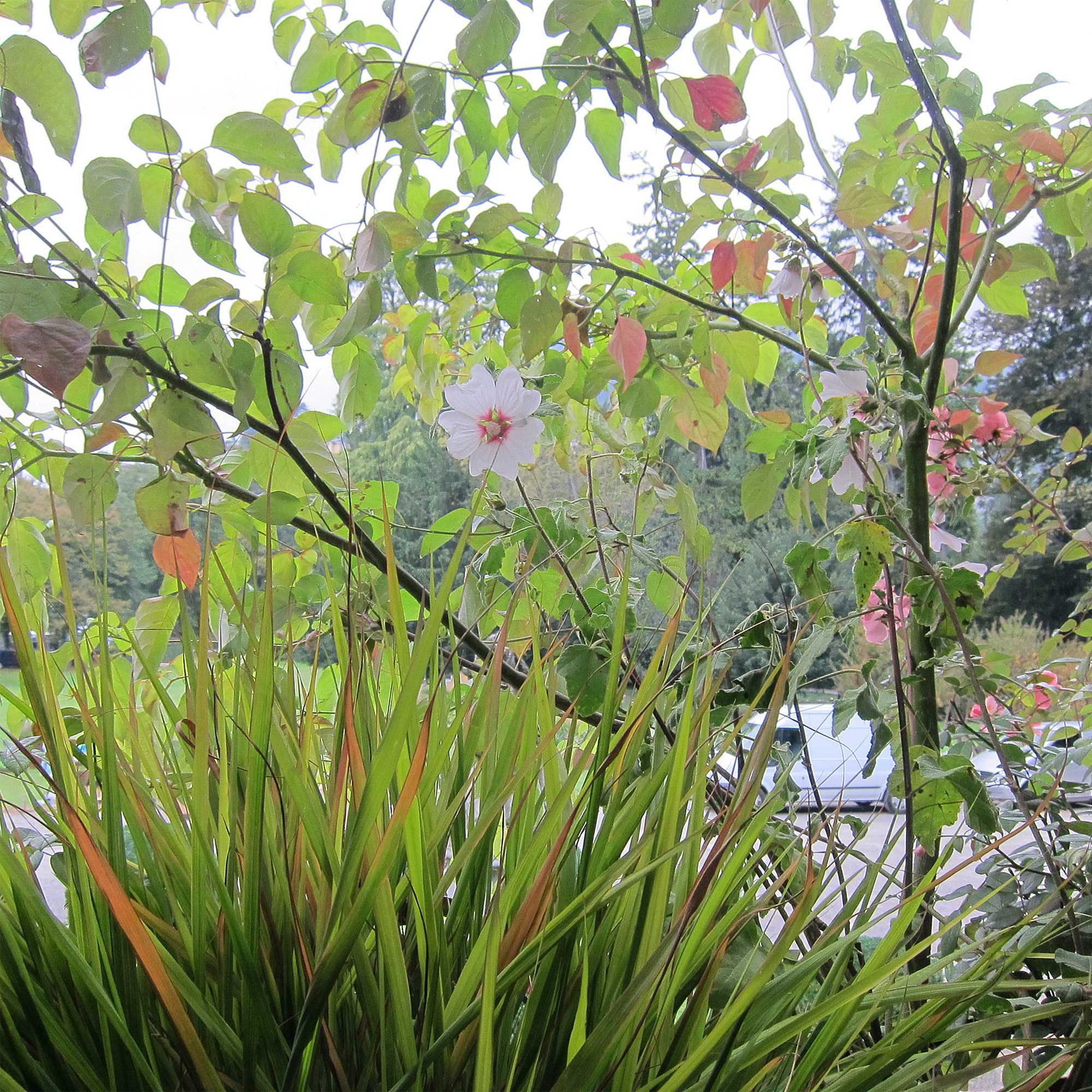horticolario_055