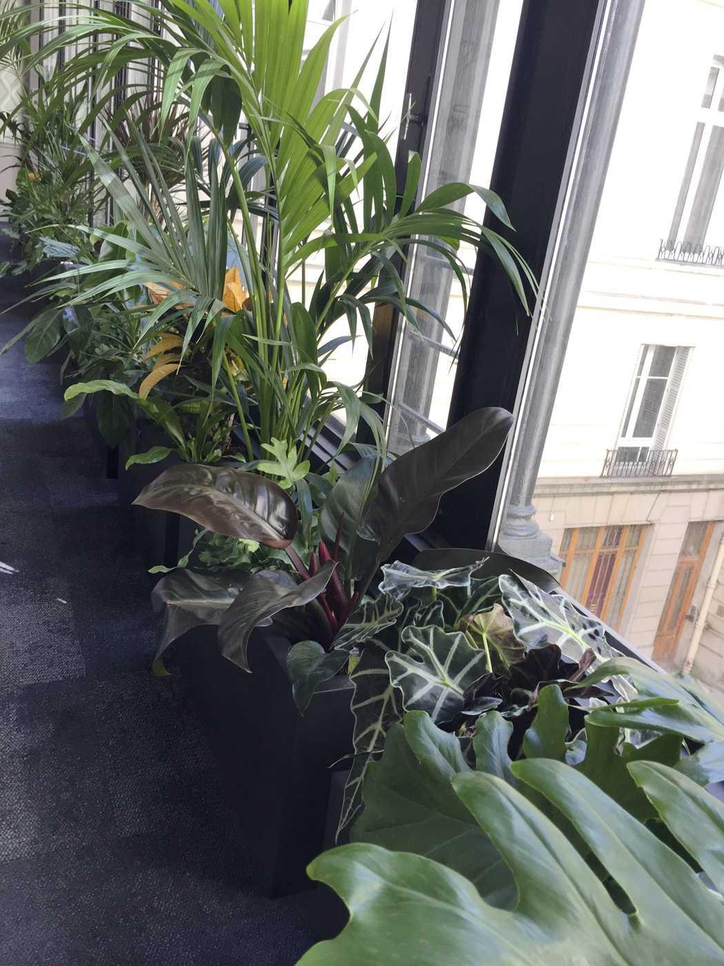 Diptyque. Décoration végétale Le Vert à Soi