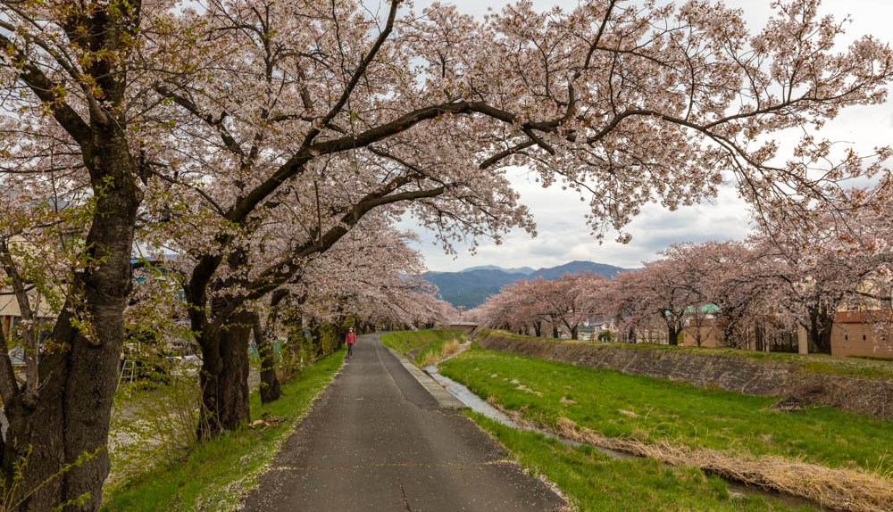 Japan Travel Guide - Picking a Season to Travel - Le Voyage Gourmand