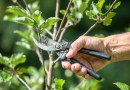 Pruning Trees and Shrubs