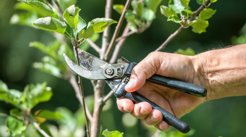 Pacific Northwest Plants You DON'T Want to Prune in the Fall.