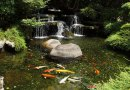Keeping your Pond Clean, Healthy and Algae Free