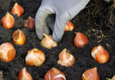 Beat the Winter Blues with these Fall Gardening Ideas