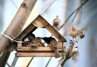 Backyard Bird Feeders? Great idea or bad move?