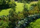 Planting an Edible Garden