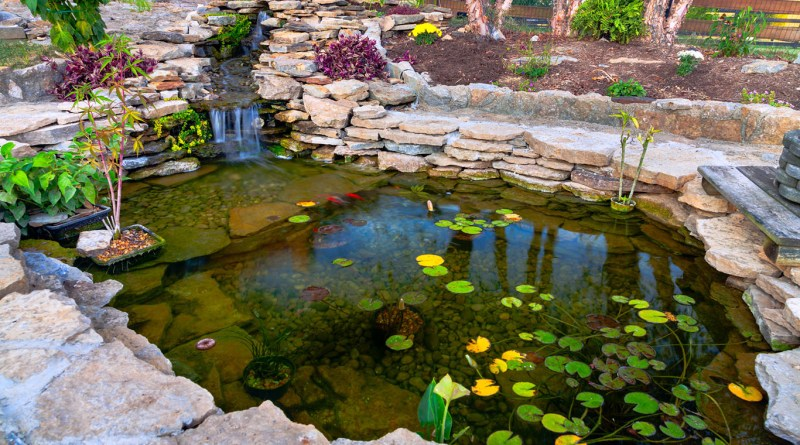 Decorative koi pond in a garden pacific northwest