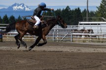 Rodeo Speed