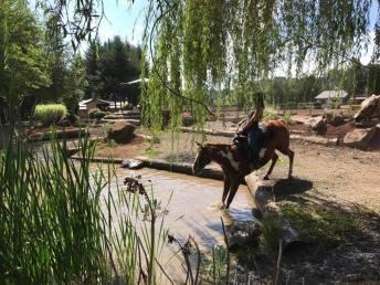Photo courtesy: Bolender Horse Park.