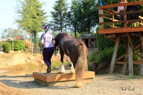 Most participants start off doing the courses in-hand, and then in the saddle. Photo credit: Hal Cook/Touched in Time.