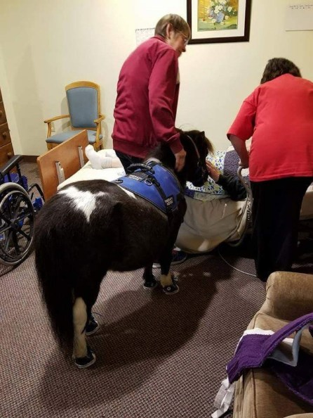 Photo courtesy: Visiting Hooves Miniature Therapy Horses and Bunnies.