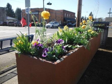 Flowers in Toledo WA Common Ground