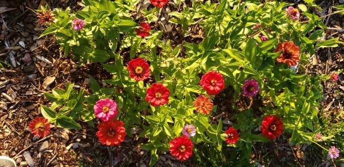 Winlock Community Garden Flower